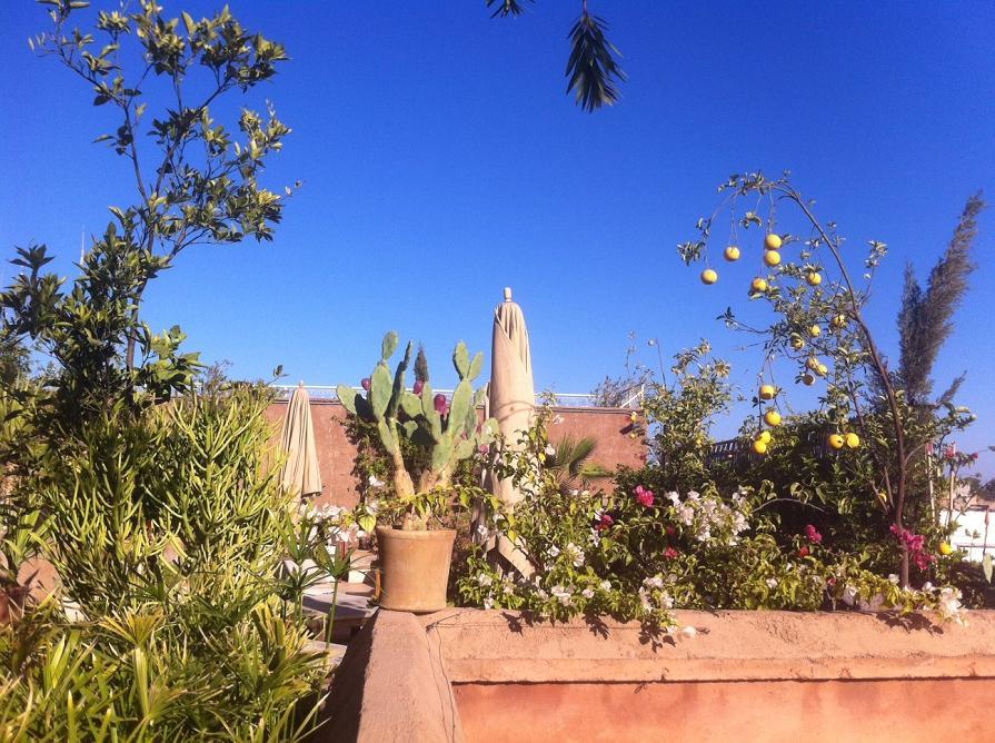Riad Al Ksar Rooftop Garden , with Koutoubia, Médina and Atlas Mountains views