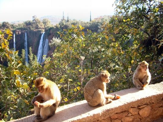 singe cascades d'ouzoud | Riad Al Ksar
