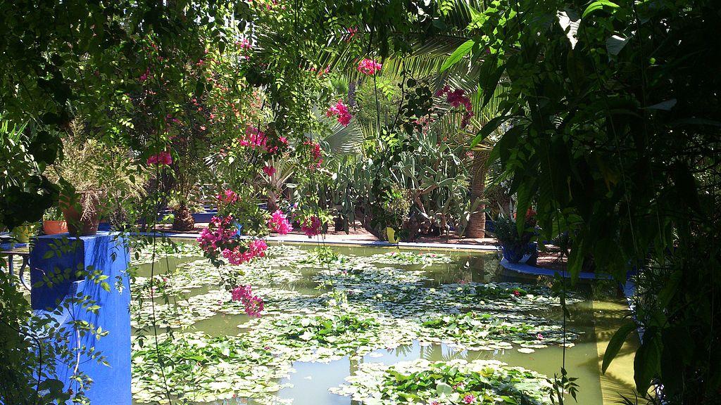 blue_green_and_pink nenuphar in majorelle garden in marrakech - Majorelle Garden