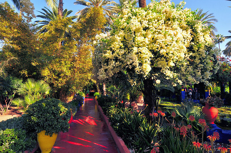 Majorelle Garden In Marrakech History Museum Price Opening Time