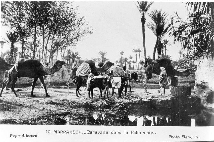 caravane sahara marrakech palmeraie